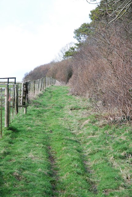 Bridleway to Old Shaftsbury Drove