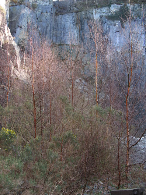 Young birch trees colonising the eastern shore of the pool in pit 2C