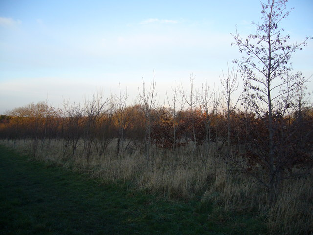 Fox and Parrot Wood, Woodland Trust