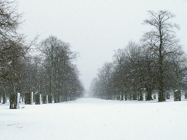 Bushy Park in snowfall
