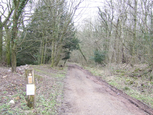 Bridleway through Little Ffosydd Wood