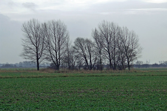 Small Copse in Large Field
