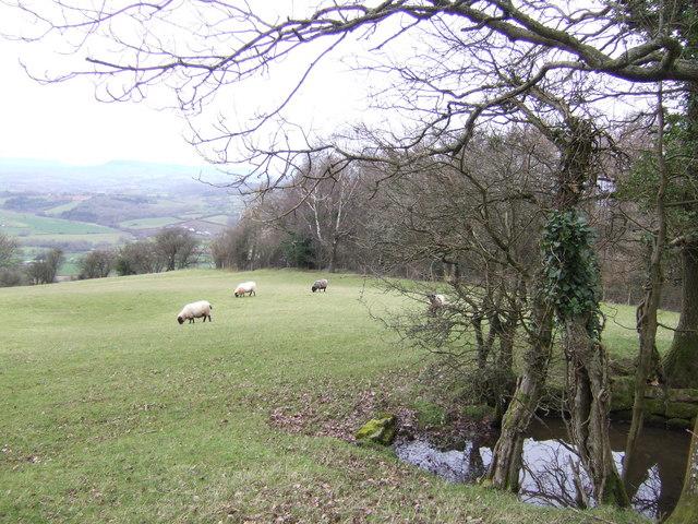 Craig-y-dorth; view north-west
