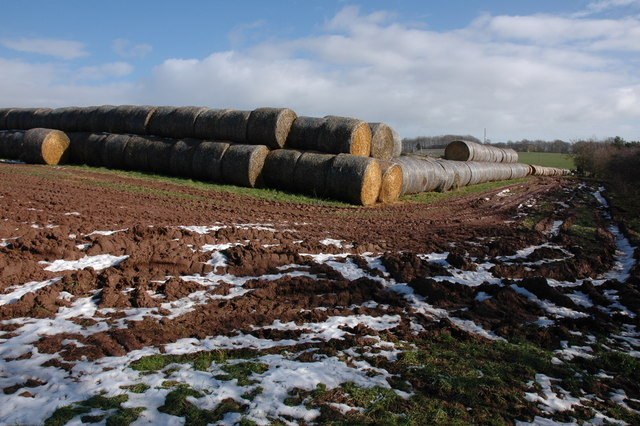 Straw bales at The Cotts Farm, Westhope