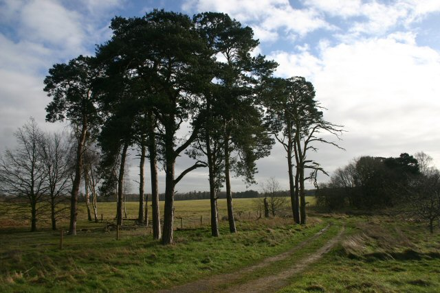 East Wretham Heath Nature Reserve