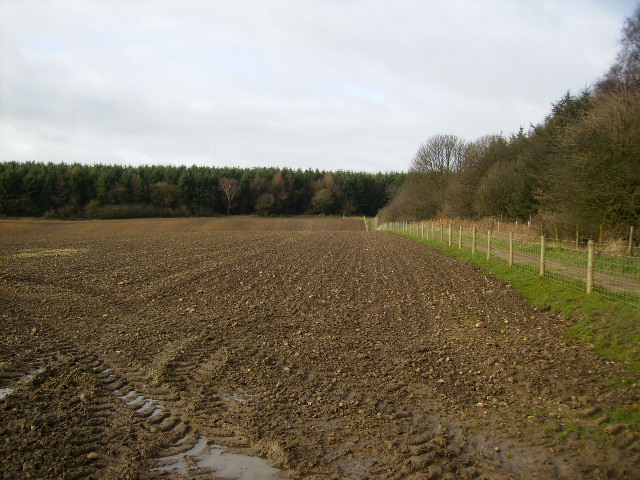 Track to the southern side of Dalby Forest