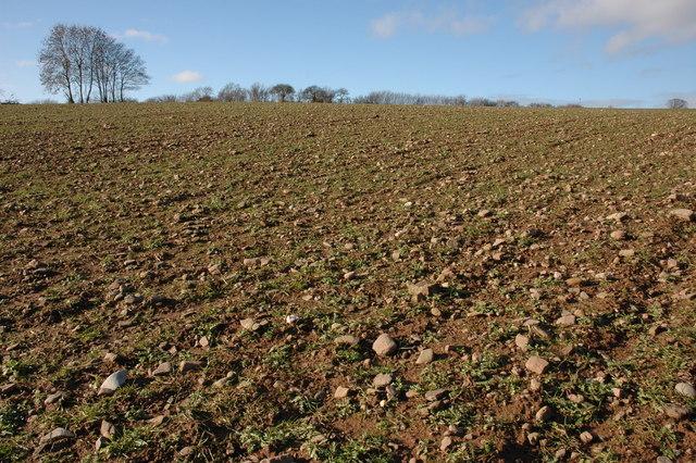 Stony arable field near Cold Oak