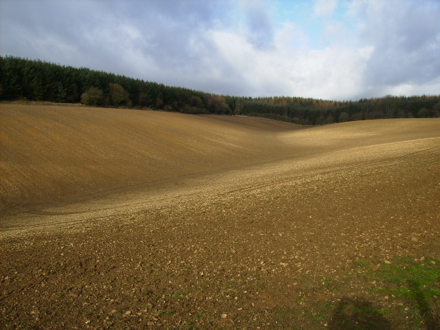 Top of Oxdale adjacent to Dalby Forest