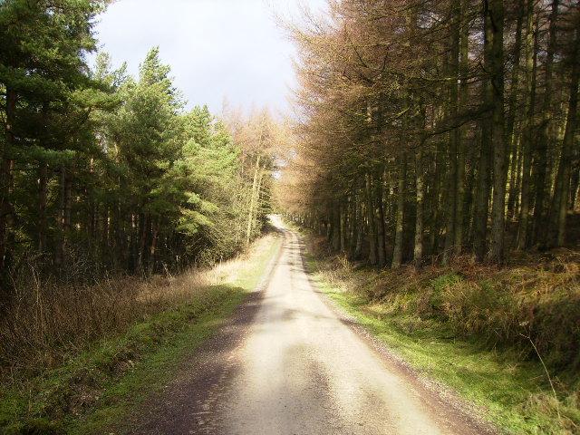 Forest road in Broxa Forest near Broad Head Farm