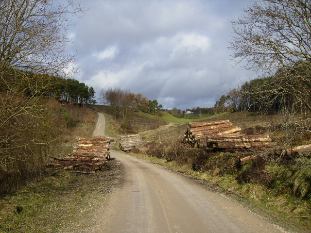 Forestry road in Broxa Forest after recent logging operations