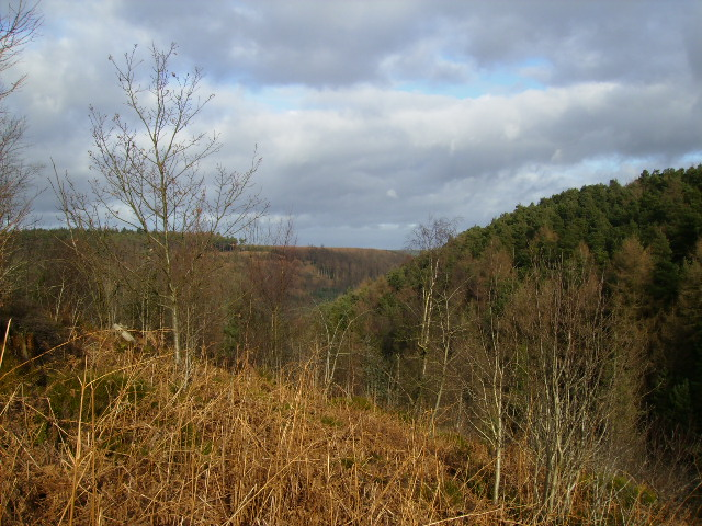 View across forestry to Stubby Head