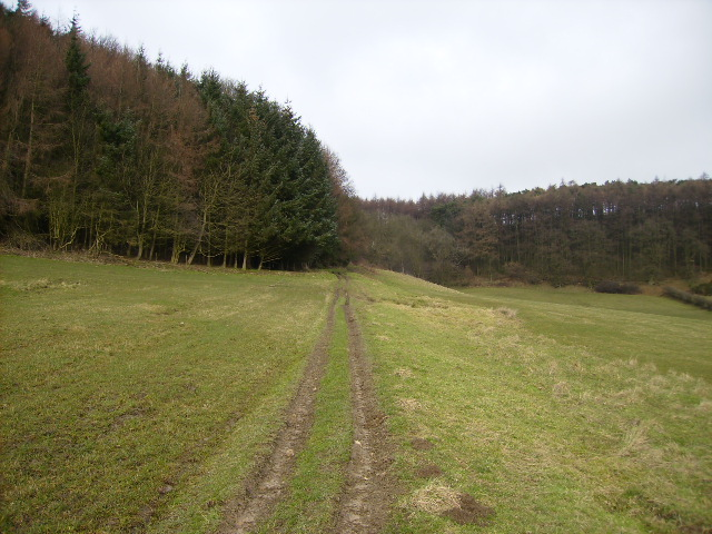 Public access route up into Broxa Forest