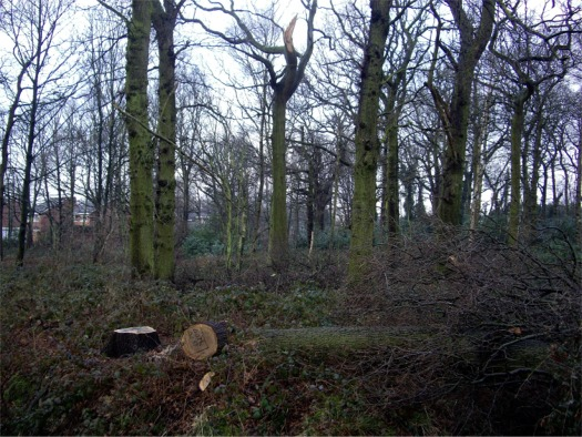 Copse at end of Ormskirk Road, Knowsley Village