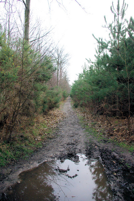 A Puddle on the Bridleway