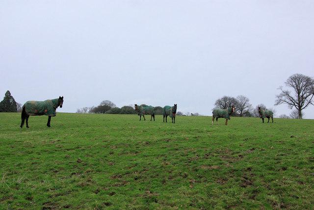 Horses in Overcoats