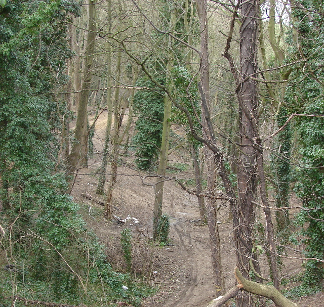 Wooded pit by Lyehill quarries