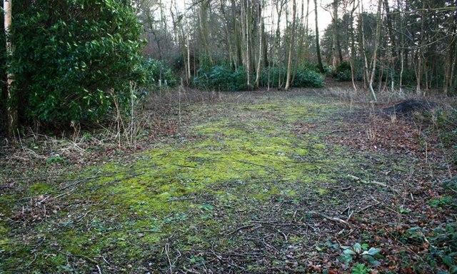 Moorlands Wood