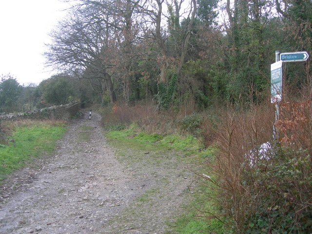 Bridleway to Weston Woods