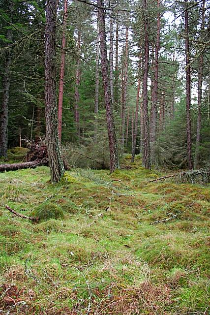 Monaughty Wood