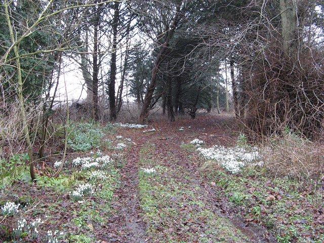 Woodlands, Allanbank