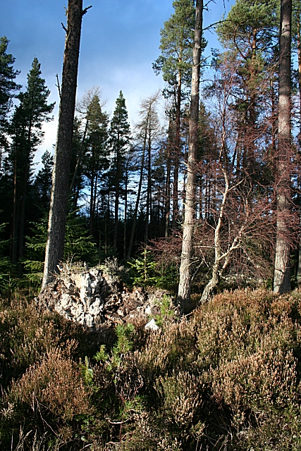 Monaughty Wood