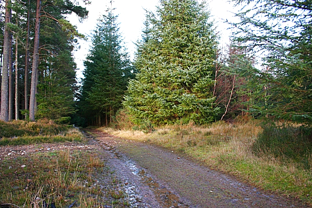 Forest Crossroads