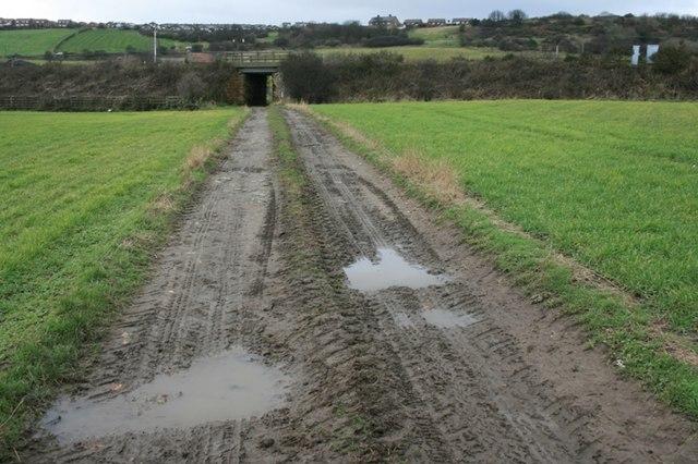 Farm Track to Gripps Farm