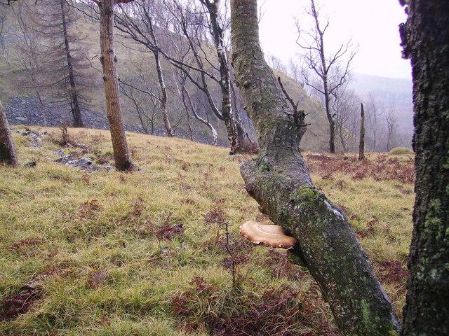 Woodland, Bell Rake