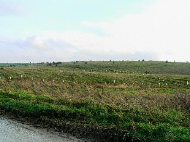 Tumulus, Imber Range, Salisbury Plain (3)