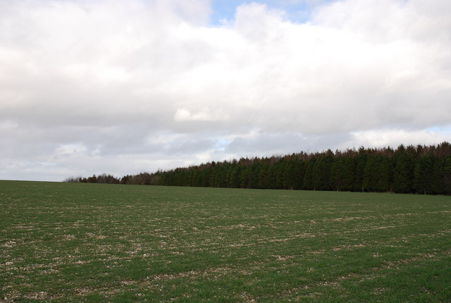 Woods on Ansty Down