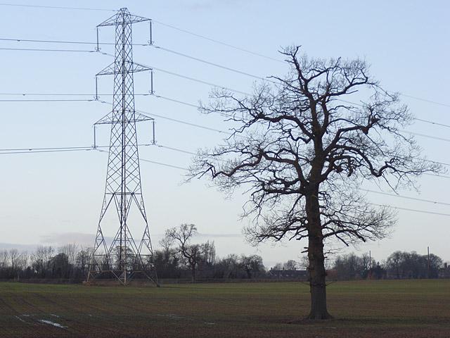Pylon and tree near Buckingham