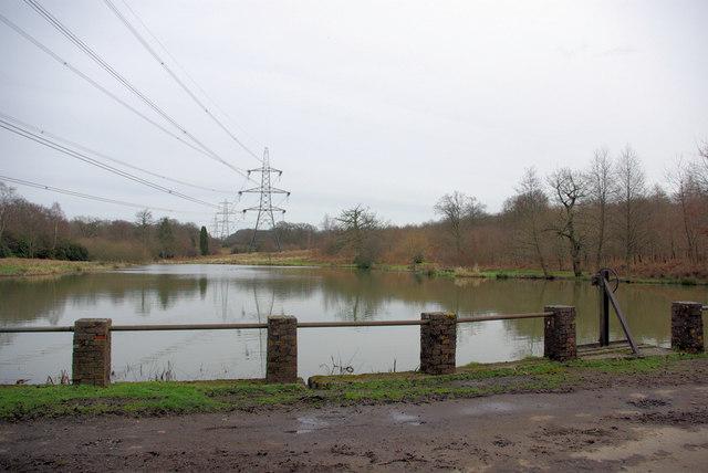 Lake in Pheasant Copse