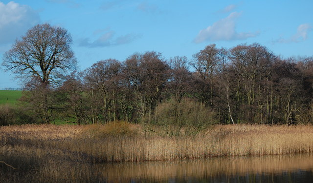 Reed Beds Budworth Mere