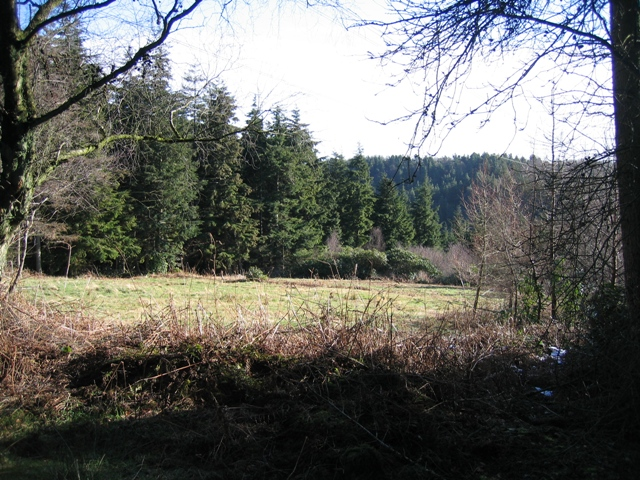 Forestry Clearing