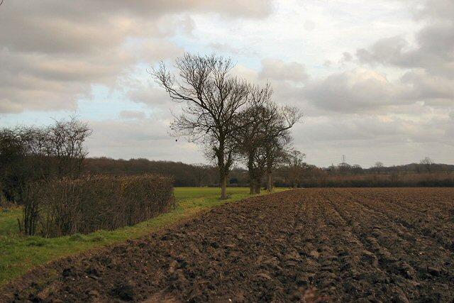 Fields near Rickinghall