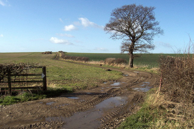 Fields between Swainby Farms and the A1