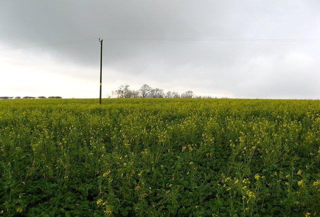 Last year's crop