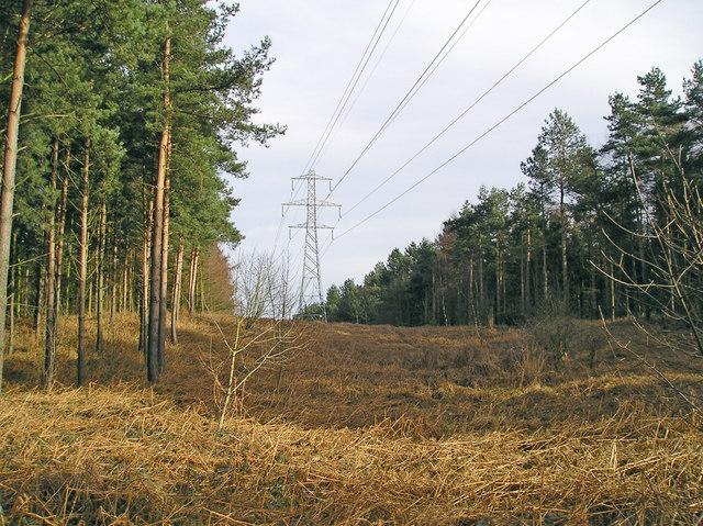 Pylon Route through Rowland Plantation