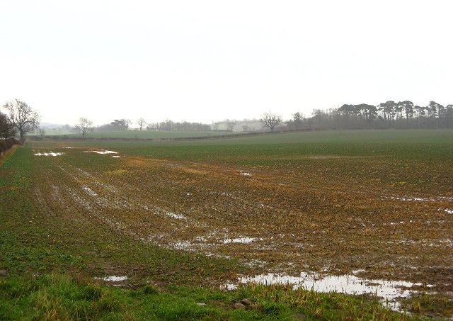 Wet fields, Broomdykes