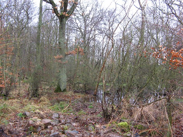 Waterlogged woodland, Broomdykes