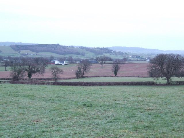 Pastoral view south of Raglan