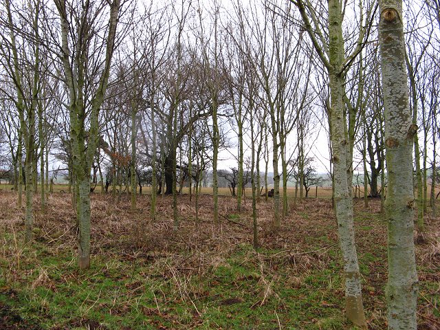 Young woodland, Hutton Hall