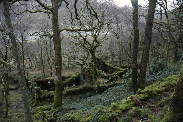 Ruin above Llyn Dinas