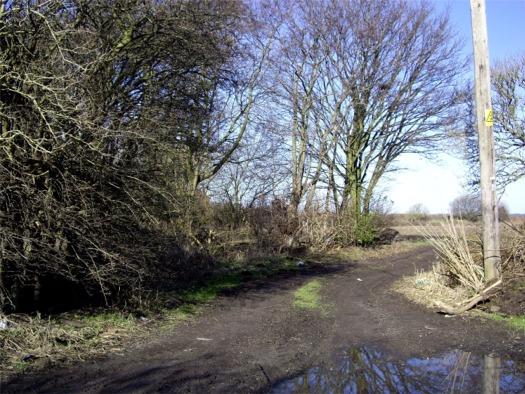 Farm track, Homer Green