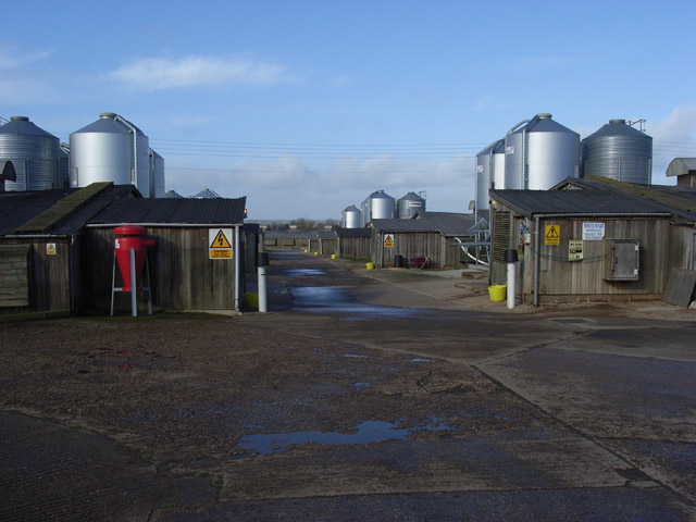 Poultry farm near Thornborough