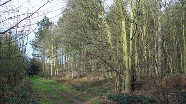 Public Footpath through Rowland Plantation
