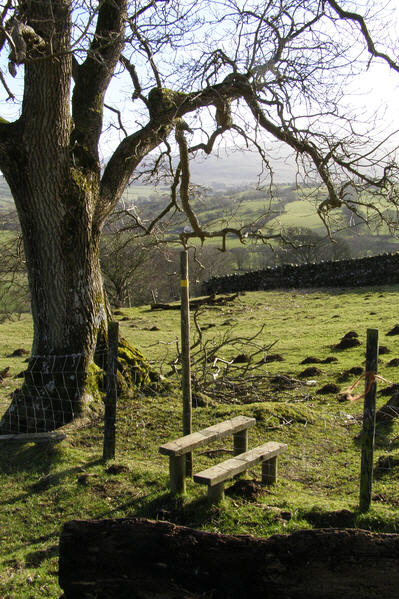 Footpath to Whelpo Beck