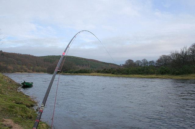 Strike!!!  A salmon has taken the fly!