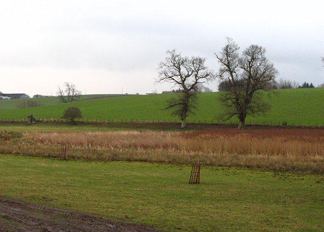 Wetland near Middlestots