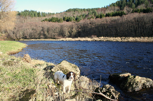 The Creachies Pool on the Rothes and Aikenway Beat.